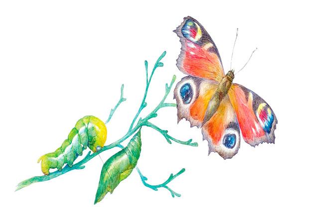 «Цветная шариковая ручка. Бабочка» - слайд 1
