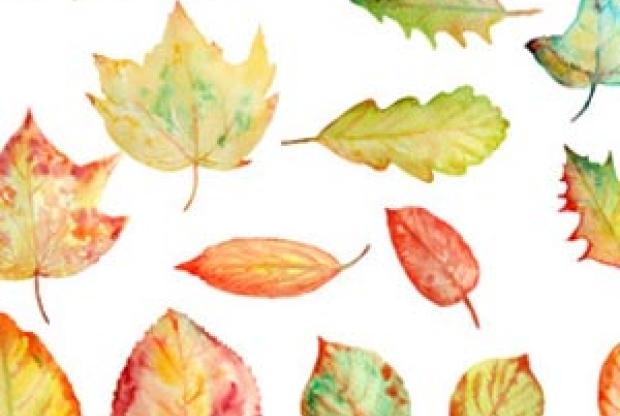 Курс ботанической иллюстрации (акварель) – «Листья» - слайд 1