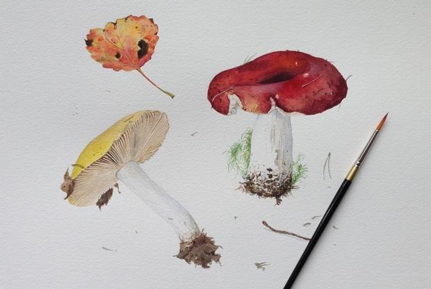 Курс ботанической иллюстрации (акварель) – «Грибы» - слайд 1