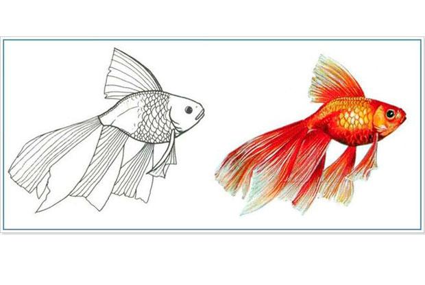 «Цветная шариковая ручка. Рыба» - слайд 1