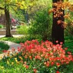 Ботанический сад МГУ имени М. В. Ломоносова «Аптекарский огород».