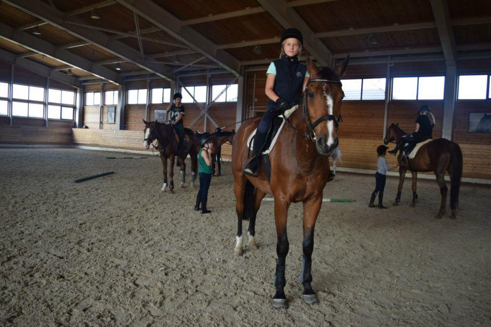 Школа верховой езды: как научиться ездить верхом
