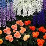 Выставки цветов в Москве: обзор флористических мероприятий — 2018