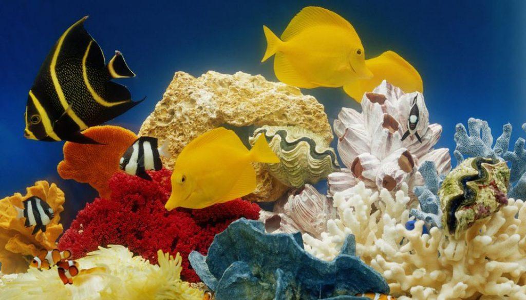 Как содержать аквариум дома