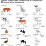 У спасенного от браконьеров леопарда Николая появилась пара в Московском зоопарке