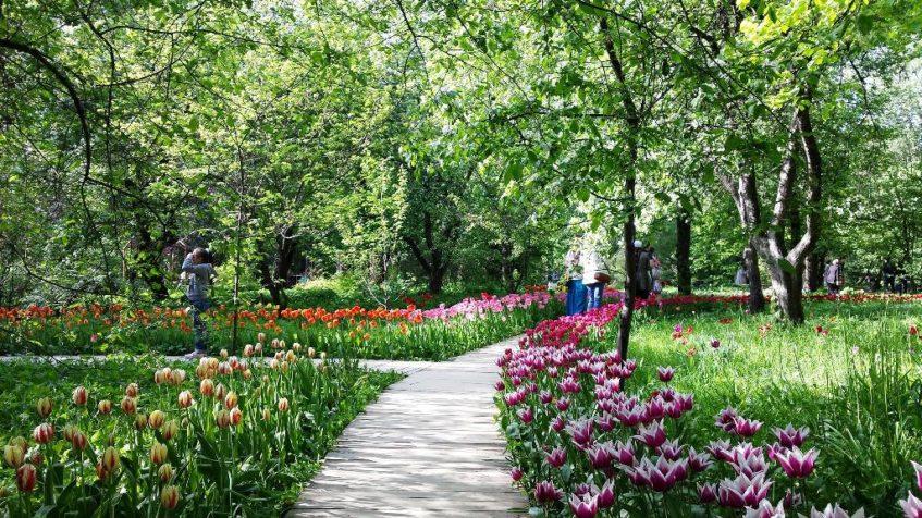 Сад «Аптекарский огород»
