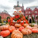 Ярмарки фестиваля «Золотая осень»