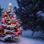 Замечательные живые ели к новому году и рождеству