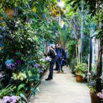«Тропическая зима»: фестиваль орхидей и хищных растений в «Аптекарском огороде»