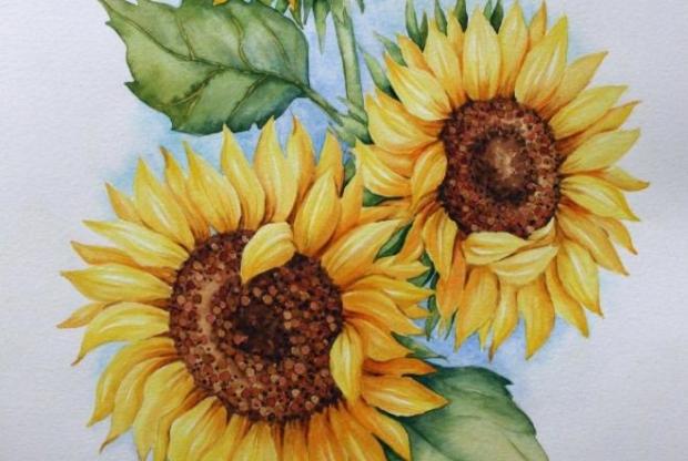 Курс ботанической иллюстрации (акварель) – «Подсолнух» - слайд 1