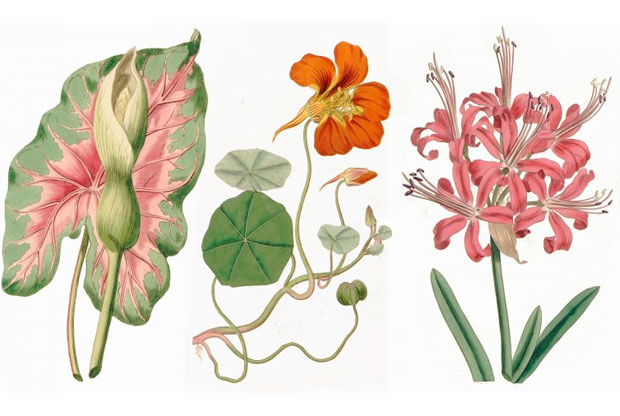?Выставка «Любовь растений» в Дарвиновском музее - слайд 1