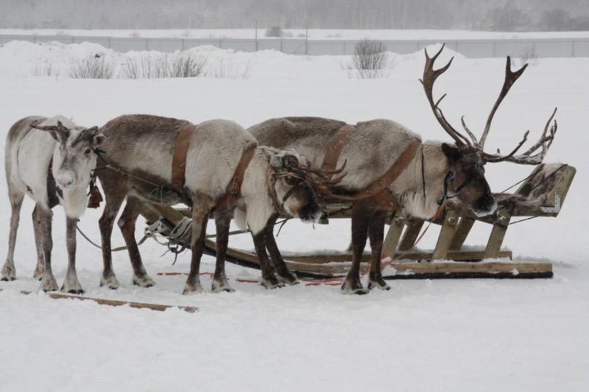 7 ферм в Подмосковье, где можно ближе познакомиться с животными