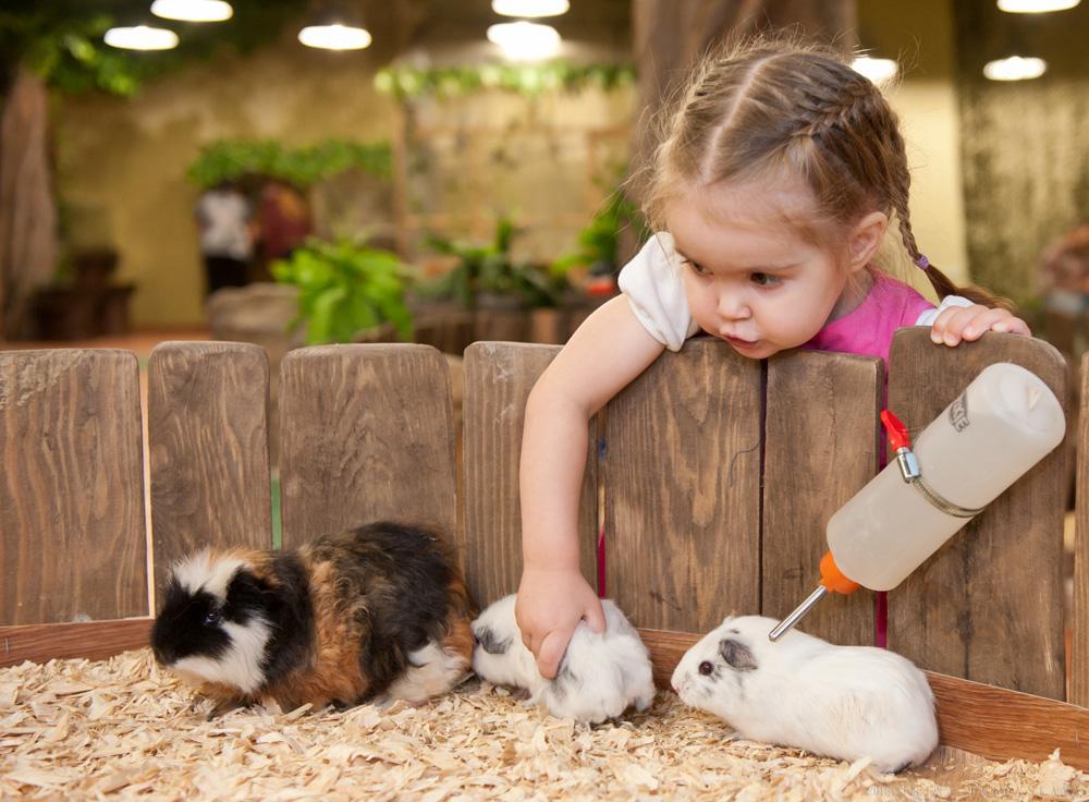 Контактные зоопарки Москвы: Топ-7 мест