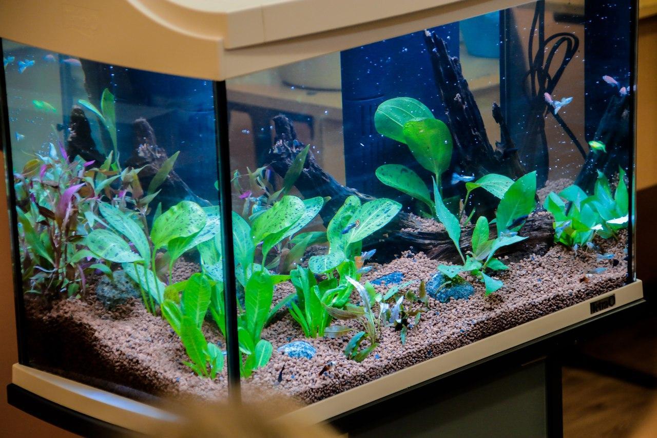 Как обслуживать и ухаживать за аквариумом