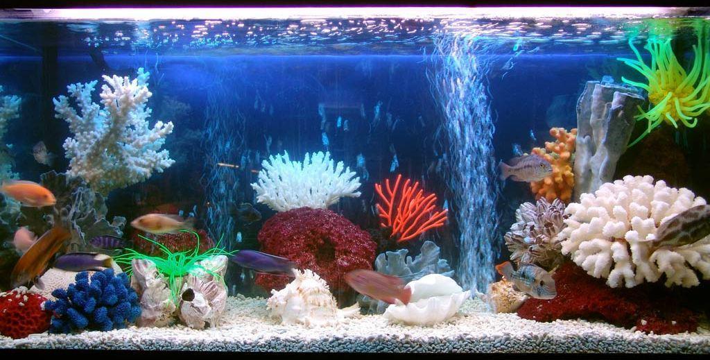 Как содержать аквариум