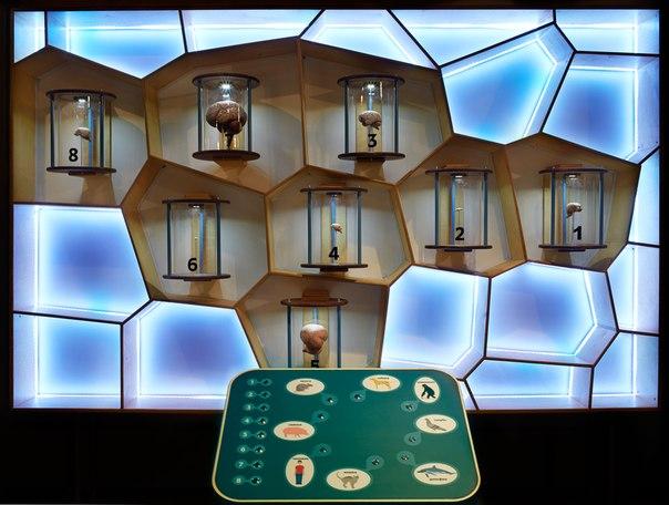 Музей «Живые системы»